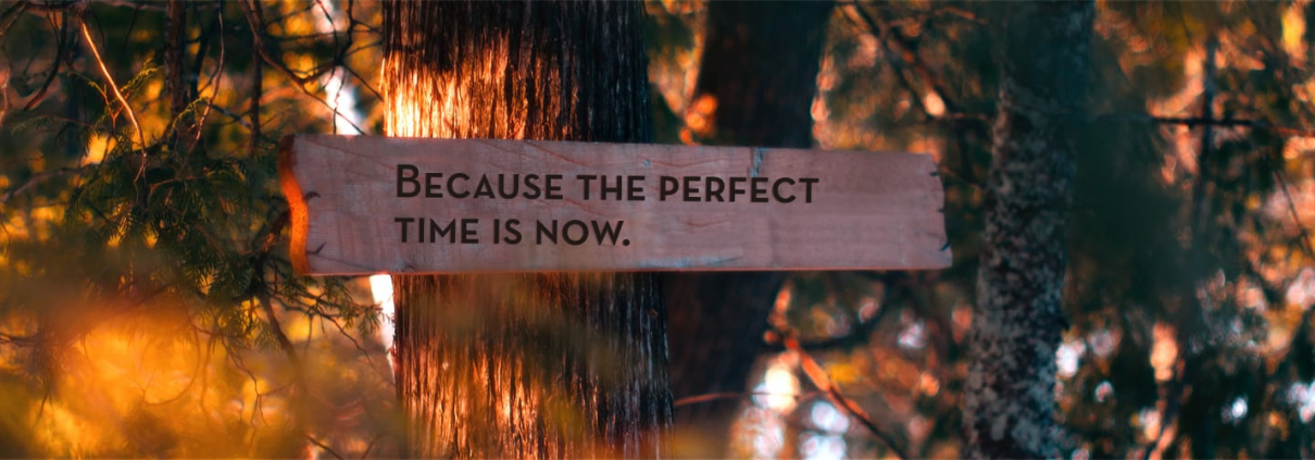 Because the perfect time is now, Schild mit Idee der Achtsamkeit im Wald